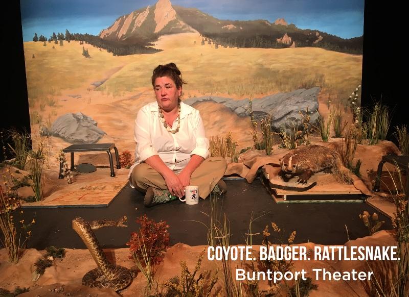 Buntport Coyote.
