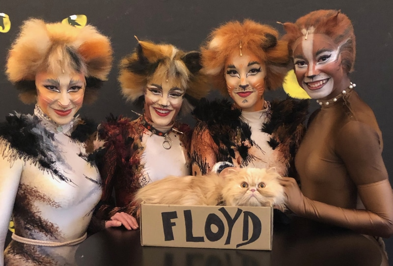 """Longmont's """"Floyd The Lion"""" made some purrfectly lovely new friends among the cast of CATS. With Cats."""